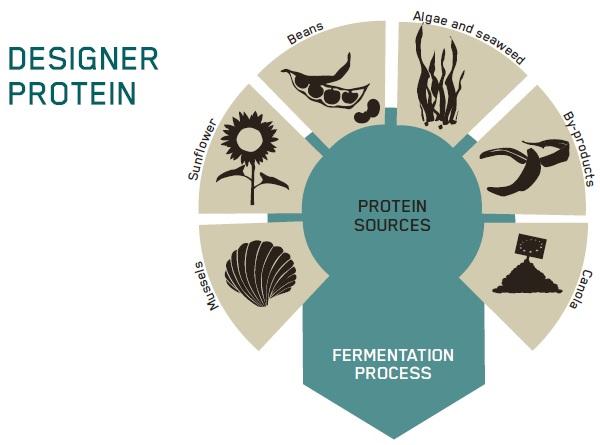 Designer Protein GB 210514